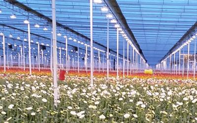 Bedrijfsbezoek (binnenkijken bij…) LG Flowers